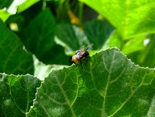 Free Insect On Leaf Edge Royalty Free Stock Photo - 15502555