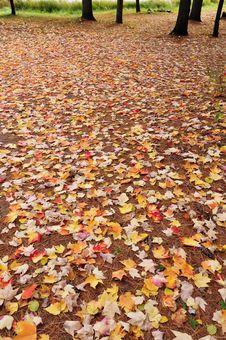 Free Autumn Background Stock Photos - 15503093