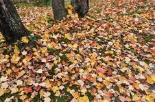 Free Autumn Background Stock Photos - 15503123