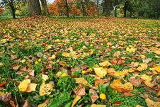 Free Autumn Ground Royalty Free Stock Image - 15504016