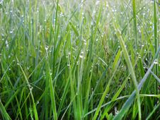 Free Green Grass Natural Background Stock Photo - 15504510