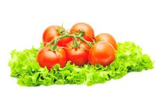 Free Branch Of Tomatoes Over Green Salad Isolated Stock Photos - 15504893