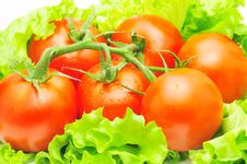 Branch Of Tomatoes Over Fresh Salad Leaves Stock Image