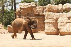 Free Elephant Royalty Free Stock Photos - 15505028
