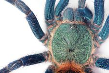 Free Spider Detail Royalty Free Stock Images - 15505179