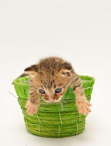 Free Kitten Royalty Free Stock Image - 15505296
