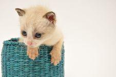 Free Kitten Stock Image - 15505341