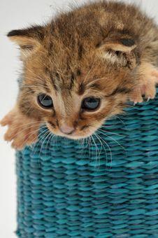 Free Kitten Stock Photography - 15505362
