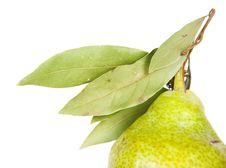 Free Pear Royalty Free Stock Photo - 15506025