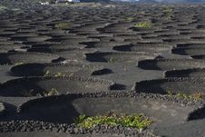 Volcanic Wine Area La Geria Royalty Free Stock Images