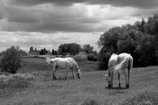 Free Horses Grazing Under A Threatening Sky Stock Photography - 15508682