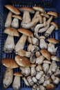 Free Ceps In A Plastic Box Stock Photos - 15511063
