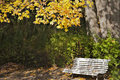 Free Quite Autumn Day And Colourfull Folliage Stock Images - 15515834