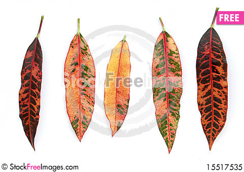 Free Colorful Leaves Royalty Free Stock Photo - 15517535