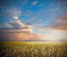 Free Summer Landscape Royalty Free Stock Photography - 15510347