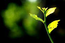 Free Leaf Stock Photo - 15510780