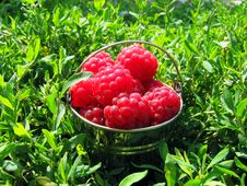 Free Raspberry In A Bucket Royalty Free Stock Image - 15511276