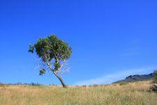 Free Oblique Birch Stock Photos - 15511393