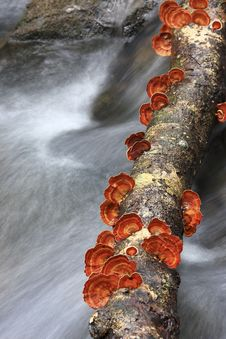 Stream In The Forest With Mushrooms, Red Royalty Free Stock Photos