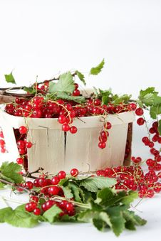 Free Red Currants In The Basket Stock Photos - 15512713