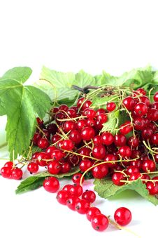 Free Red Currants Stock Images - 15512714