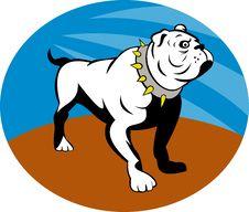 Free Proud English Bulldog Royalty Free Stock Photography - 15513497