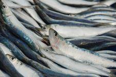 Free Sardine Stock Images - 15514224