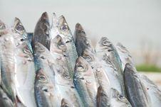 Free Fish Market Stock Image - 15514771