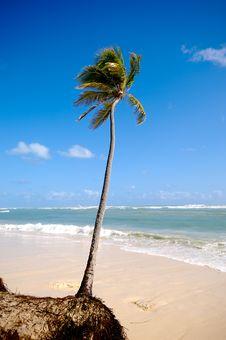 Free Exotic Caribbean Beach Royalty Free Stock Photo - 15514815