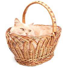 Free Cat In A Basket Stock Images - 15515264