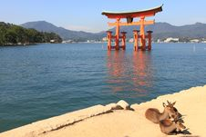 Free Torii At High Tide Stock Photography - 15515822