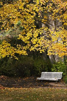 Free Quite Autumn Day And Colourfull Folliage Stock Photos - 15516033