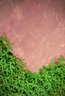 Free Pink Stone And Green Grass Stock Image - 15517211