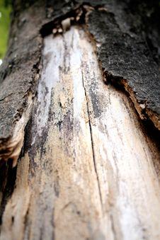 Free Bark Of Tree Royalty Free Stock Photos - 15519488