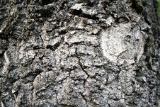 Free Bark Of Tree Stock Photography - 15519612