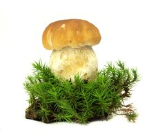 Free Cep In Moss Royalty Free Stock Photos - 15520838
