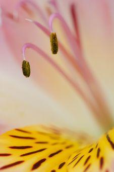 Macro Beautiful Flower Stock Images