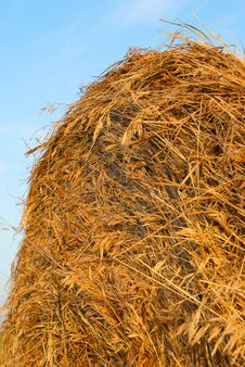 Free Freshly Rolled Hay Bale Stock Images - 15521484