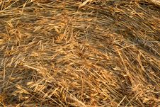 Free Freshly Rolled Hay Bale Royalty Free Stock Image - 15521496