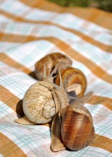 Free Snail Meeting Stock Photography - 15522102
