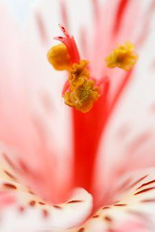 Macro Beautiful Flower Royalty Free Stock Photo
