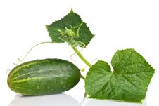 Free Green Cucumber With Leaves Stock Images - 15522574