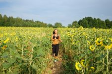 Free Morning Jogging On Sunflower Field Stock Photography - 15522642