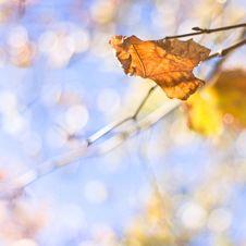 Free Autumn Leaf Royalty Free Stock Photos - 15523558