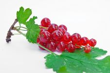 Free Twig Of Redcurrants Royalty Free Stock Photography - 15523737