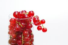 Free Fresh Redcurrant In Glass Stock Image - 15523861