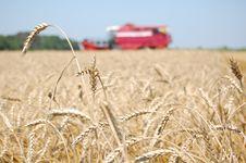 Free Wheat Harvesting Stock Image - 15524001