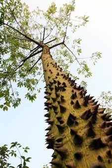 Free Thorn Tree Stock Photo - 15525000