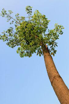Free Tree Stock Image - 15525061