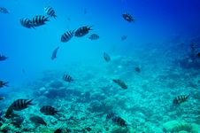 Free Astonishing Undersea World Of Red Sea. Stock Image - 15525401